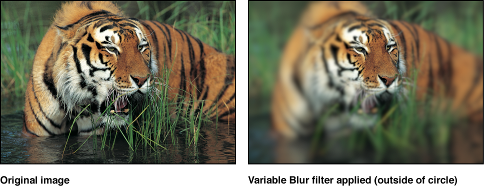 Canvas showing effect of Variable Blur filter