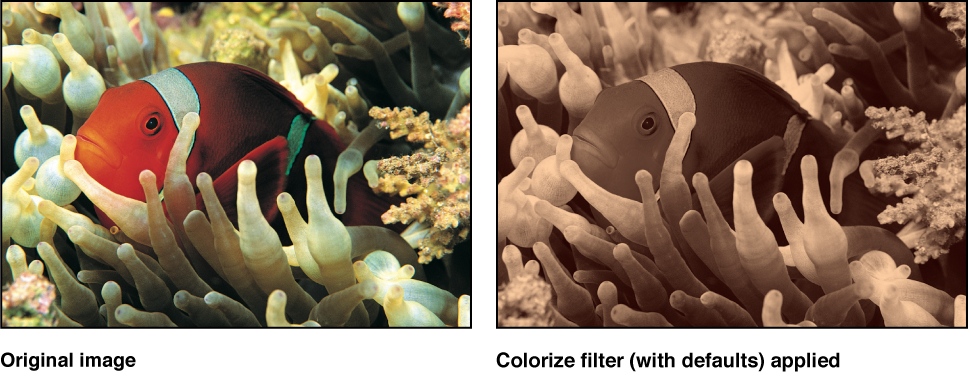 Canvas showing effect of Colorize filter