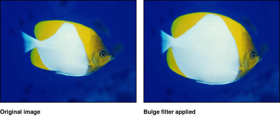 Canvas showing effect of Bulge filter