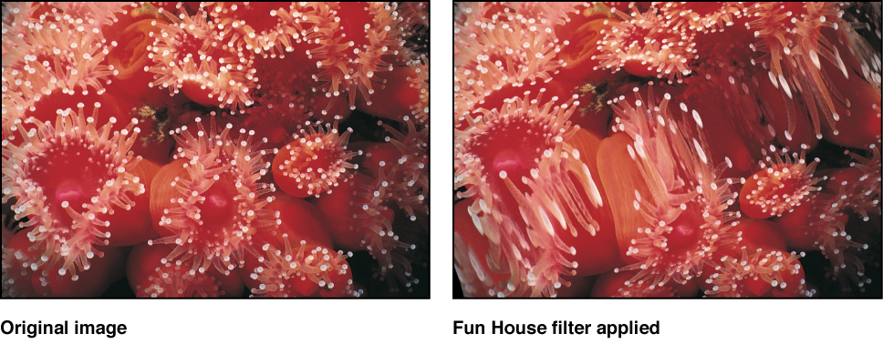 Canvas showing effect of Fun House filter