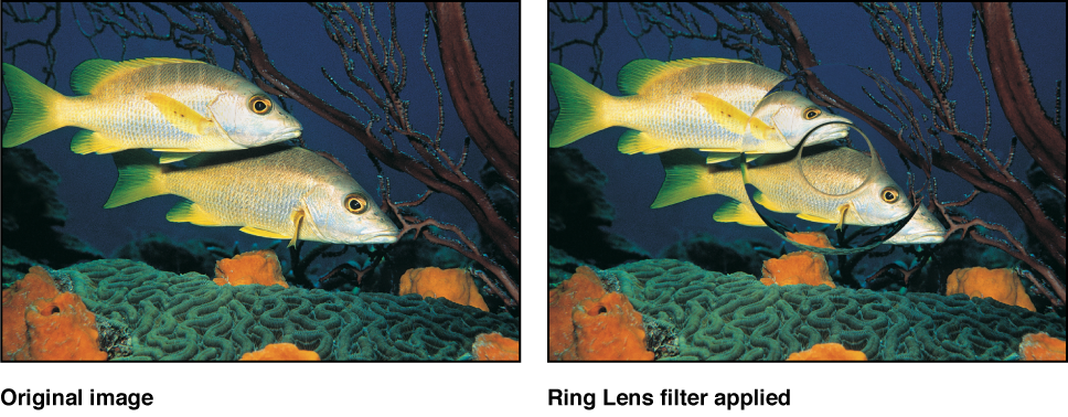 Canvas showing effect of Ring Lens filter