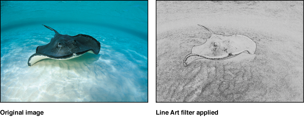 Canvas showing effect of Line Art filter