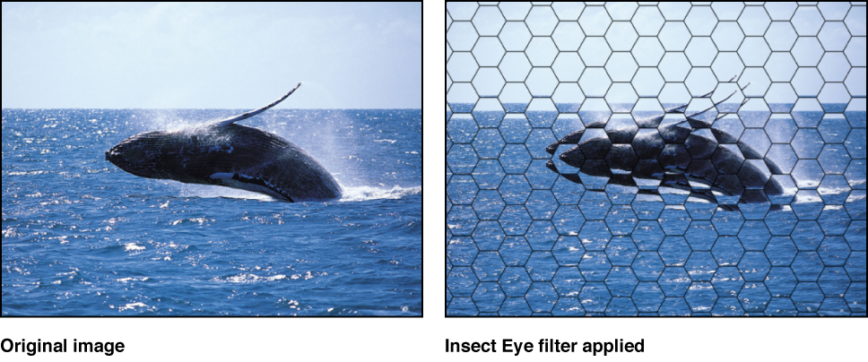 Canvas showing effect of Insect Eye filter