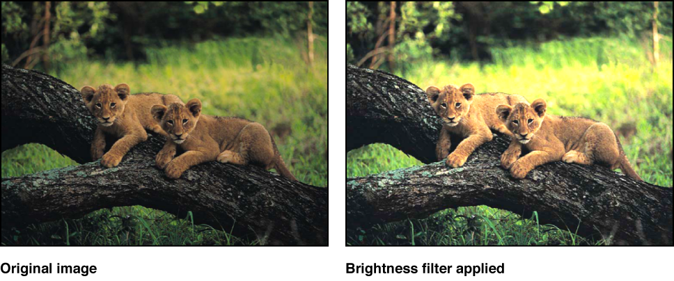 Canvas showing effect of Brightness filter