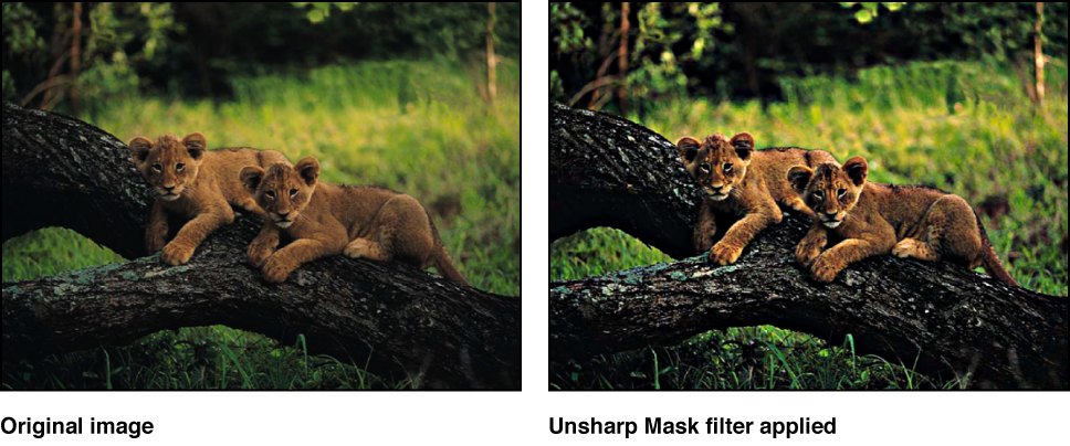 Canvas showing effect of Unsharp Mask filter