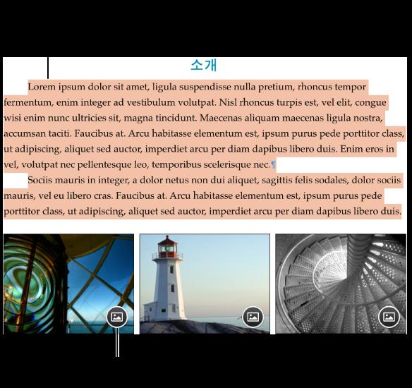 위치 지정자 텍스트 및 이미지