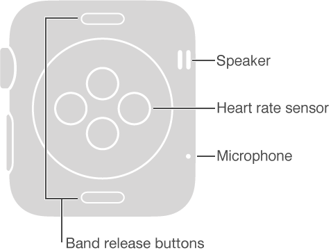 Back side of Apple Watch with these callouts to the side opposite the Digital Crown: Speaker, Microphone. Callout to buttons on top and bottom of the back side: Band release buttons: Press to slide out the band. Callout to disc-shaped raised area on center back: Heart rate sensor and charging pad.