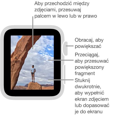 Po wyświetleniu zdjęcia możesz: obracać Digital Crown, aby powiększać lub pomniejszać; przeciągać, aby przesuwać powiększony fragment zdjęcia; stukać dwukrotnie, aby przełączać między wyświetlaniem całego zdjęcia iwypełnianiem nim ekranu. Aby przechodzić między zdjęciami, przesuwaj palcem wlewo lub wprawo.