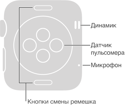 Задняя панель AppleWatch со сносками, указывающими на сторону, противоположную от колесика DigitalCrown: «Динамик, микрофон». Сноски, указывающие на кнопки в верхней и нижней части задней панели: «Кнопки смены ремешка. Нажмите, чтобы снять ремешок». Сноска, указывающая на круглую выпуклую часть в центре задней панели: «Датчик пульсомера и зарядная подушка».
