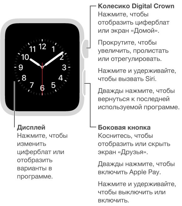 Передняя панель AppleWatch со сноской, указывающей на колесико DigitalCrown/кнопку «Домой»: «Нажмите, чтобы отобразить циферблат на экране «Домой». Дважды нажмите, чтобы открыть последнюю программу. Нажмите и удерживайте, чтобы вызвать Siri. Поверните, чтобы увеличить масштаб, пролистать или отрегулировать». Вторая сноска, указывающая на боковую кнопку: «Нажмите, чтобы отобразить или скрыть раздел «Друзья». Дважды нажмите, чтобы открыть ApplePay. Нажмите и удерживайте, чтобы выключить или включить». Третья сноска, указывающая на дисплей: «Нажмите, чтоб изменить вид циферблата. Нажмите в программе, чтобы посмотреть доступные варианты».