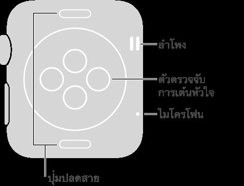 Apple Watch ด้านหลังที่มีคำบรรยายต่างๆ ในด้านตรงข้ามกับ Digital Crown ลำโพง ไมโครโฟน คำบรรยายของปุ่มต่างๆ ทางด้านบนและด้านล่างของด้านหลัง ปุ่มปลดสาย กดเพื่อเลื่อนสายออก คำบรรยายของบริเวณรูปวงกลมที่ยกขึ้นที่ตรงกลางของด้านหลัง ตัวตรวจจับการเต้นหัวใจและแป้นชาร์จ