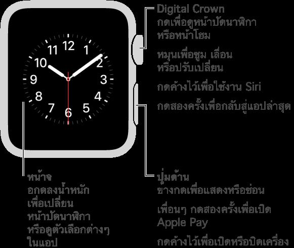 Apple Watch ด้านหน้าพร้อมคำบรรยายชี้ไปที่ปุ่ม Digital Crown/โฮม กดเพื่อดูหน้าปัดนาฬิกาหรือหน้าโฮม กดสองครั้งเพื่อกลับสู่แอปล่าสุด กดค้างไว้เพื่อใช้งาน Siri หมุนเพื่อซูม เลื่อน หรือปรับเปลี่ยน คำบรรยายที่สองชี้ไปที่ปุ่มด้านข้าง กดเพื่อแสดงหรือซ่อนเพื่อนๆ กดสองครั้งเพื่อเปิด Apple Pay กดค้างไว้เพื่อเปิดหรือปิดเครื่อง คำบรรยายที่สามชี้ไปที่หน้าจอ กดเพื่อเปลี่ยนหน้าปัดนาฬิกา กดเพื่อดูตัวเลือกต่างๆ เมื่ออยู่ในแอพ