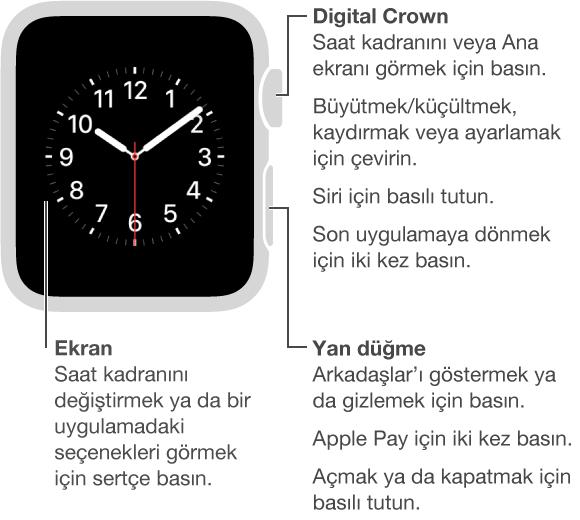 Apple Watch'un ön tarafında Digital Crown/Ana Ekran Düğmesini gösteren belirtme çizgisi: Saat kadranını veya Ana ekranı görmek için basın. Son uygulamaya dönmek için iki kez basın. Siri için basılı tutun. Büyütmek, kaydırmak veya ayarlamak için çevirin. İkinci belirtme çizgisi yan düğmeyi gösterir: Arkadaşlar'ı göstermek ya da gizlemek için basın. Apple Pay için iki kez basın. Açmak ya da kapatmak için basılı tutun. Ekranı işaret eden üçüncü belirtme çizgisi: Saat kadranını değiştirmek için basın. Uygulamada seçenekleri görmek için basın.