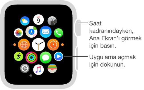Apple Watch'ta, dokunarak uygulamaları açtığınız Ana ekran. Ana ekranı açmak için saat kadranından Digital Crown'a basın.
