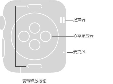 Apple Watch 表背,这些标注位于 Digital Crown 表冠的对侧: 扬声器、麦克风。 表背顶部和底部按钮标注: 表带释放按钮: 按下滑出表带。 表背中间光盘状突起区域的标注: 心率感应器和充电板。